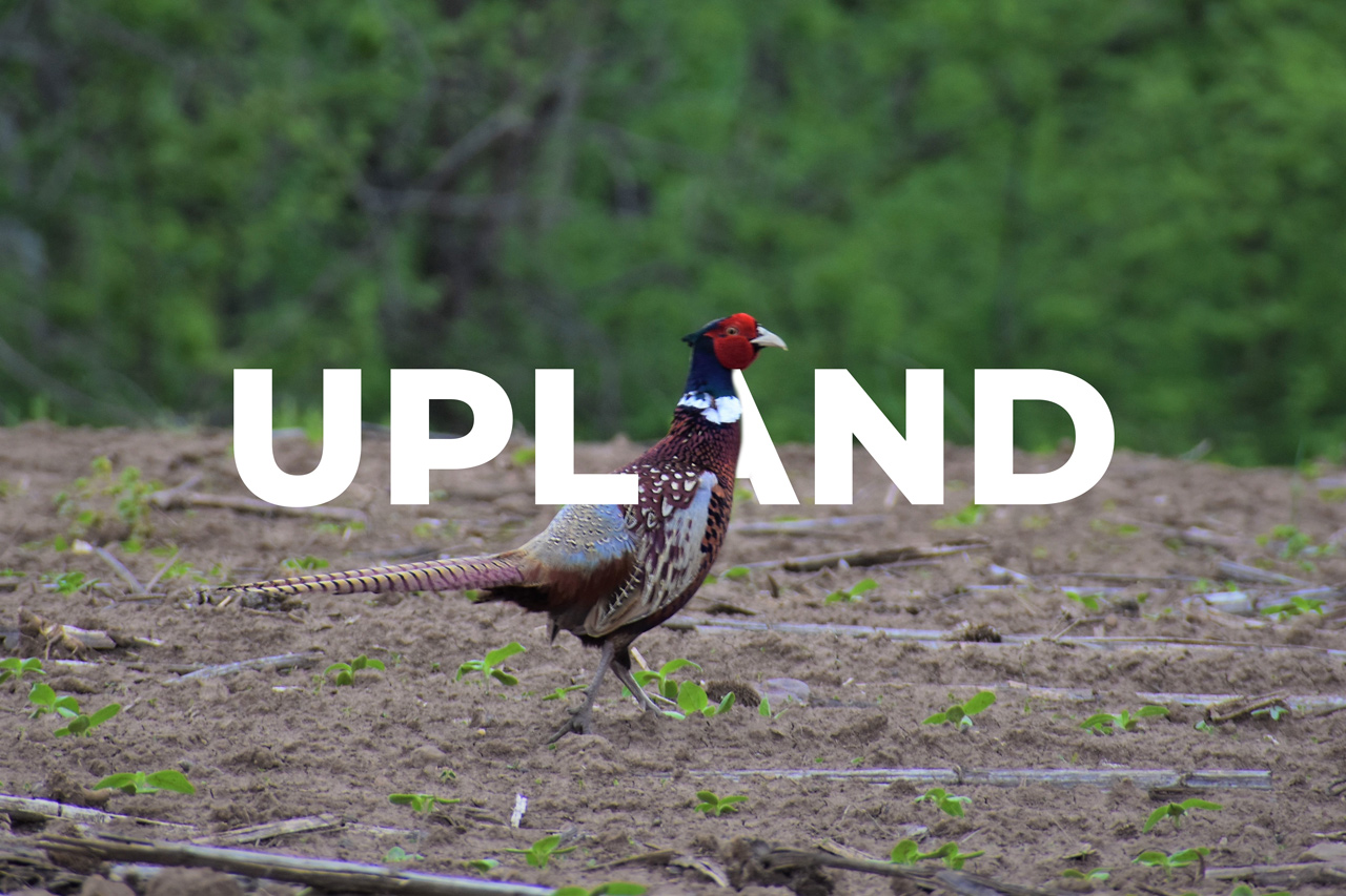 Upland-Management-New