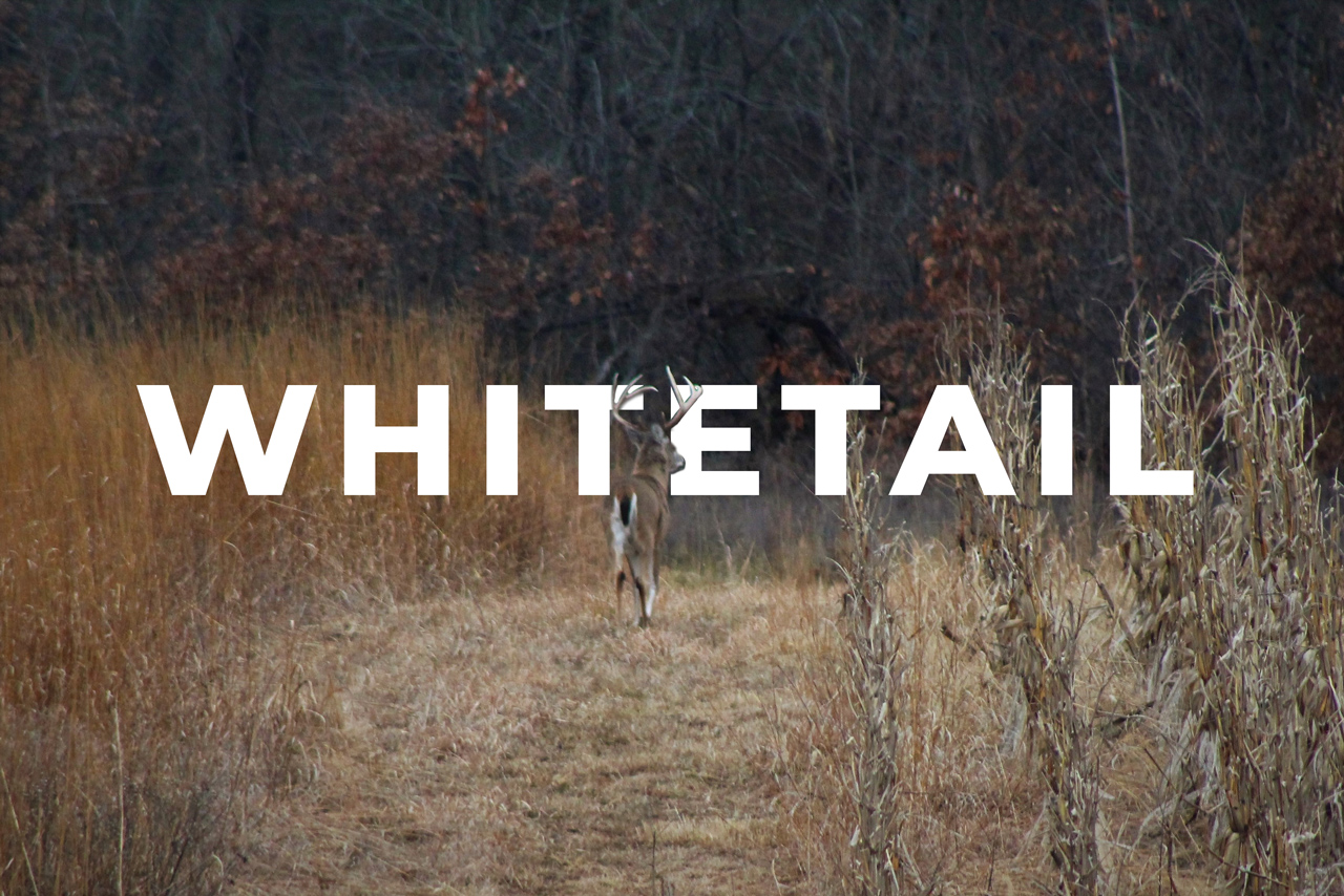 Whitetail-Management